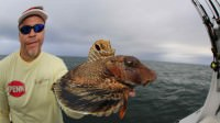 Mark Davis catches a sea robin fish while saltwater fishing off the coast of Montauk, New York