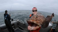 Mark Davis catches a lingcod while saltwater fishing with Tim Berg's Alaskan Fishing Adventures off the coast of Seward Alaska
