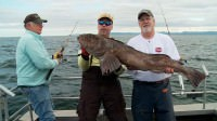 Mark Davis and Tim Berg catch lingcod saltwater fishing in Alaska