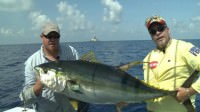 Mark Davis and Kevin Beach of Mexican Gulf Fishing Company catch a yellowfin tuna while saltwater fishing 30 miles off the coast of Venice, Louisiana